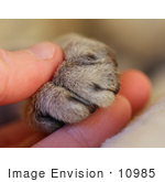 #10985 Picture Of A Human Hand And Cat Paw