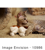#10986 Picture of a Frisky Savannah Kitten by Jamie Voetsch