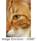 #10987 Picture Of A Cat Face