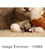 #10989 Picture Of A Kitten'S Paw On A Toy
