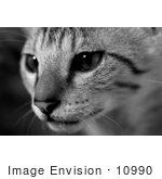 #10990 Picture of a Savannah Kitten Face by Jamie Voetsch