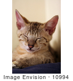 #10994 Picture Of A Tired Happy Kitten