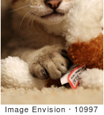 #10997 Picture Of A Savannah Kitten And Stuffed Toy