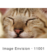 #11001 Picture Of A Sleeping Kitten