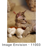 #11003 Picture of a Kitten After Attacking a Toy by Jamie Voetsch