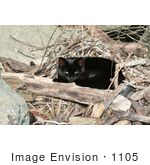 #1105 Picture of a Black Cat Laying on Wood Sticks by Kenny Adams