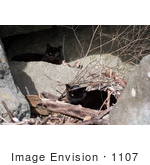 #1107 Picture of a Two Stray Black Cats with Eye Problems by Kenny Adams