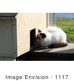 #1117 Picture Of A Stray Cat Looking At An Outdoor Cat-House Door