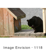 #1118 Picture Of A Black Stray Cat Cleaning Itself