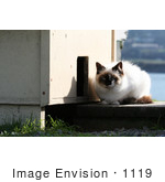 #1119 Picture of a Stray Cat Sitting Outside of a Cat House by Kenny Adams