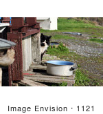 #1121 Picture Of A Stray Cat By A Pot Of Water