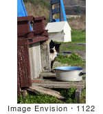 #1122 Picture Of A Homeless Cat Beside A Feeding Pot