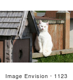 #1123 Picture of a White Cat Sitting on the Edge of a Cat House by Kenny Adams