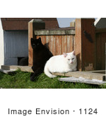 #1124 Picture Of A Black And A White Cat Sitting Together