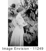#11249 Picture of Helen Keller in a Sunflower Garden by JVPD
