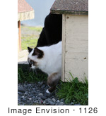 #1126 Picture Of A Cat Walking Out Of A Cat-House