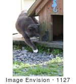 #1127 Picture Of An Old Stray Cat Walking Around A Cat House