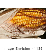 #1139 Picture Of Yellow Corn On The Cob
