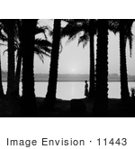 #11443 Picture Of A Woman By Palm Trees