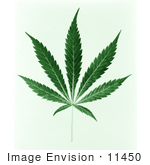 #11450 Picture of a Green Pot Leaf by JVPD