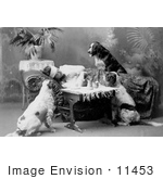 #11453 Picture Of A Sick Woman With Dogs