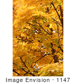 #1147 Picture Of A Yellow Fall Colored Leaves