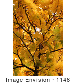 #1148 Picture Of Yellow Leaves On Tree Branches