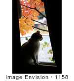 #1158 Picture Of A Cat Looking Out Of A Window