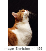 #1159 Picture of a Cat Looking Up by Kenny Adams