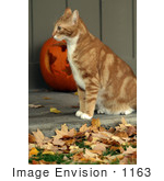 #1163 Picture of a Cat Listening by Kenny Adams