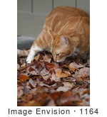 #1164 Picture Of A Cat Smelling Fall Leaves