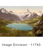 #11743 Picture Of Cows Grazing By Pond And Bernese Alps