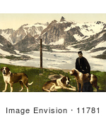#11781 Picture Of A Man With St Bernard Dogs