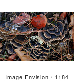 #1184 Photograph of Bracket Fungus Growing on a Tree Stump by Jamie Voetsch