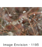 #1195 Photograph of Burrs, Stickers, Stickseed by Jamie Voetsch
