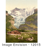 #12015 Picture Of Livestock And Barn Near Baregg Glacier Switzerland