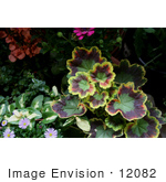 #12082 Picture of Colorful Geranium Leaves by Jamie Voetsch