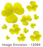 #12084 Picture Of Yellow Clover Leaves