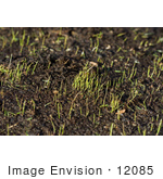 #12085 Picture of Sprouting Grass by Jamie Voetsch