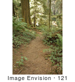 #121 Stock Photo Of A Path Through A Redwood Forest