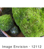 #12112 Picture of Moss Rocks by Jamie Voetsch