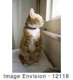 #12118 Picture Of An Orange Cat Sitting By A Window