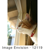 #12119 Picture Of A Cat Looking Out A Window