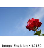 #12132 Picture of a Red Rose Against Sky by Jamie Voetsch
