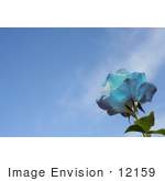 #12159 Picture Of A Blue Rose Against Blue Sky