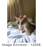 #12208 Picture Of Savannah Kittens Resting