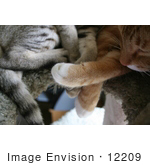 #12209 Picture of Cat Paws on a Cat Tree by Jamie Voetsch