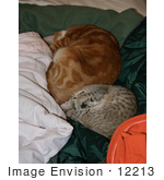 #12213 Picture Of Sleeping Cats