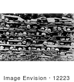 #12223 Picture of Human Skulls on a Rock Shelf by JVPD