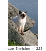 #1223 Picture of an Ocean Cat Yawning by Kenny Adams